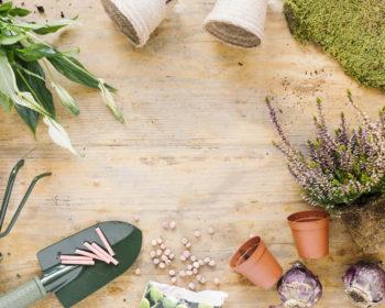 Как правильно пересаживать горшечные растения